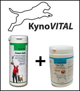 KynoVital Kombiangebot Protect JUNIOR-FLEX